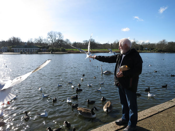 Feeding birds in Hyde park